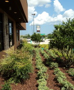 Landscaping Is an Investment for Business and Property Owners